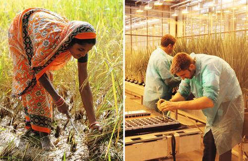Hybrid-Pflanzen aus den Labors sind für Umwelteinflüsse anfälliger als alte Sorten. Und sie machen die Bauern abhängig von den Agrar-Konzernen.