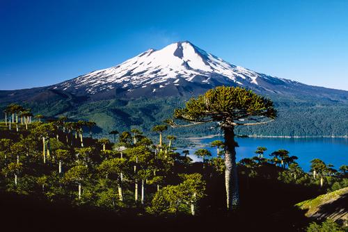 Chile bei der Mundologia 2013
