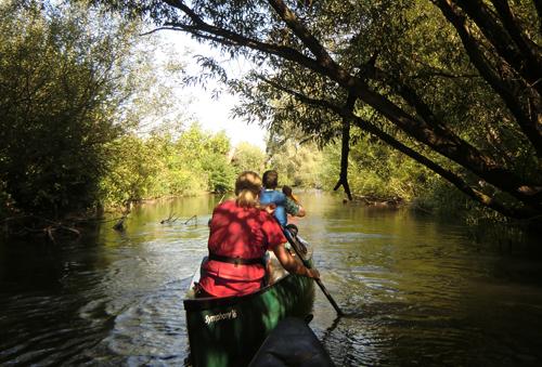 Das dicht bewachsene Ufer kann an der Alten Elz zur Herausforderung werden. Bilder: Tanja Bruckert