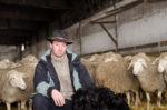 Schäfer Jürgen Seywald und seine Schafe