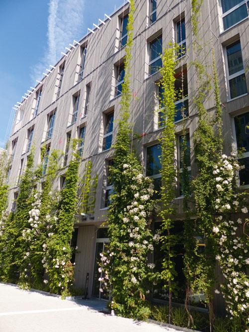 Das Green City Hotel verdient sich mittlerweile auch seinen Namen dank rankenden Gewächsen.