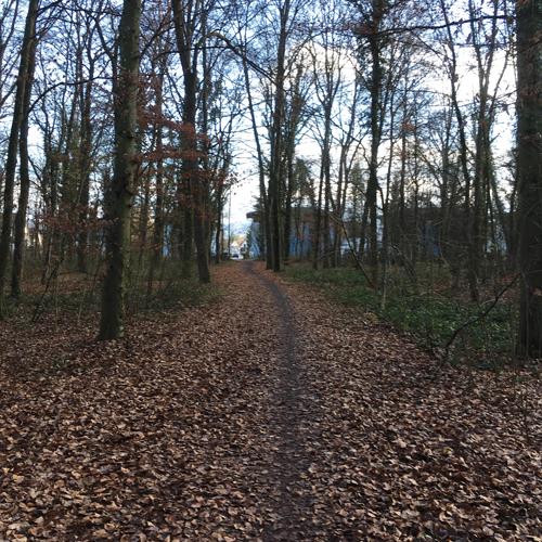Wäldchen oder Bauland: Dieter Salomon ist von einer Erweiterung der Mooswald-Siedlung abgerückt. Und erntete viel Kritik.