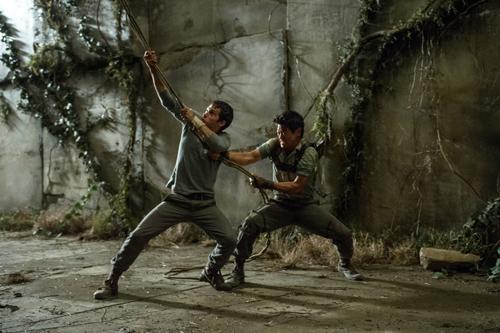 Zunächst muss sich Thomas (Dylan O'Brien, rechts unten) in einem Schaukampf mit Gally (Will Poulter) beweisen.